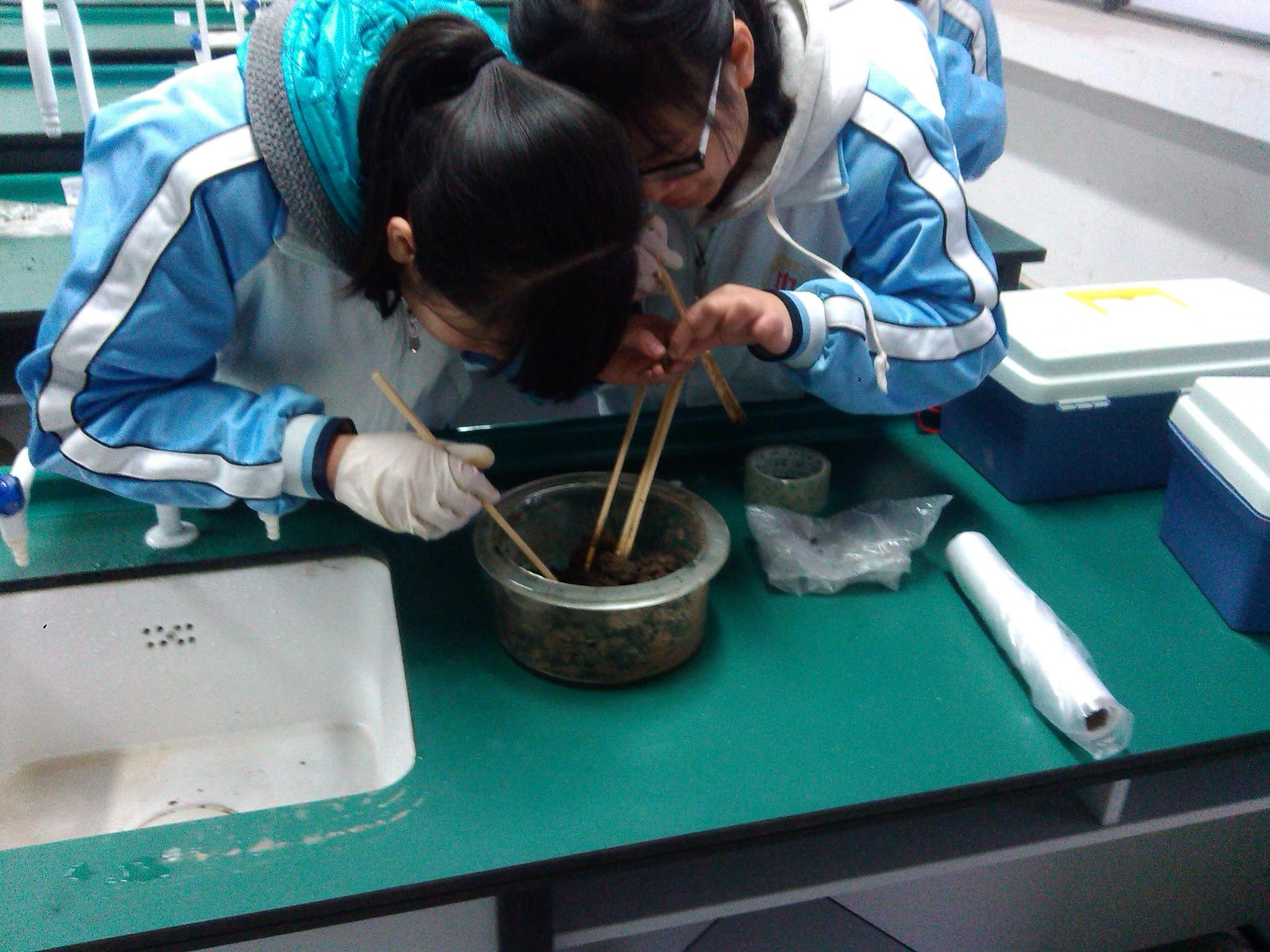 学校的土壤小动物丰富度